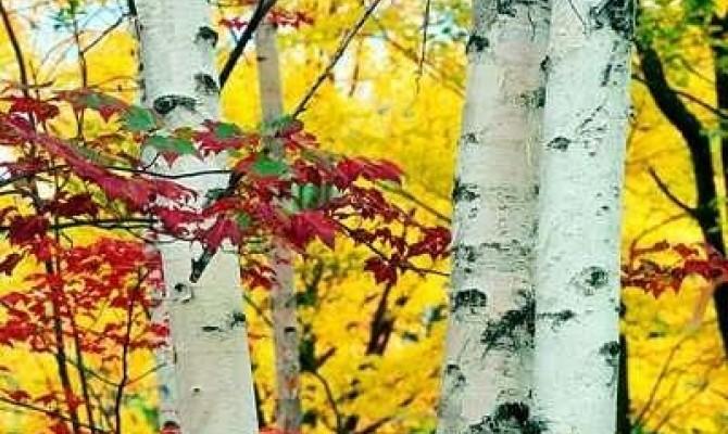 10 сентября – День разноцветных букетов. Заядлым дачникам и обладателям цветников на домашних участках это не составит никакого труда, а для «обделенных» горожан самым простым решением станет прогулка по парку и собирание опавших ярких листьев. ДК приглаш