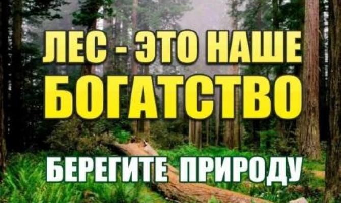 Умеете ли вы беречь лес?