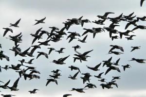 Встречай с любовью птичьи стаи