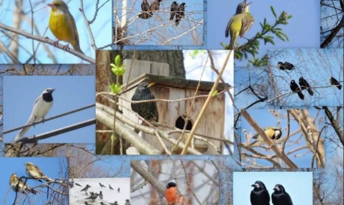 «Птицы – наши друзья!»