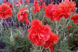 Международный день цветка отмечается 21 июня 2020 года. Юдановский ДК приглашает на просмотр фильма