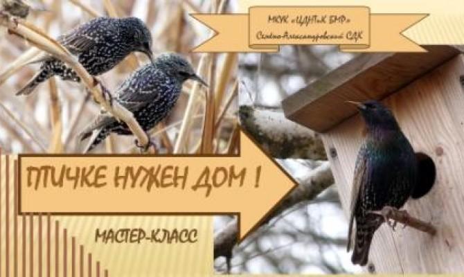 Птичке нужен дом