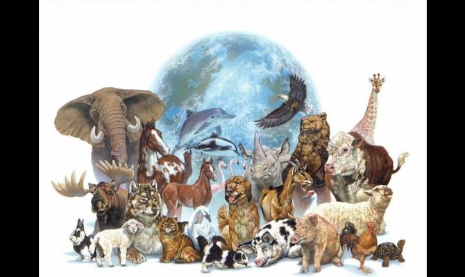 Всемирный день дикой прироы тематическая программа.
