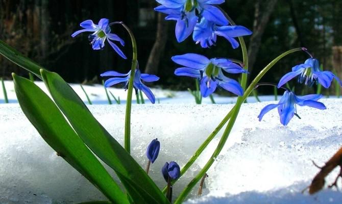 «Подснежник – символ весны»
